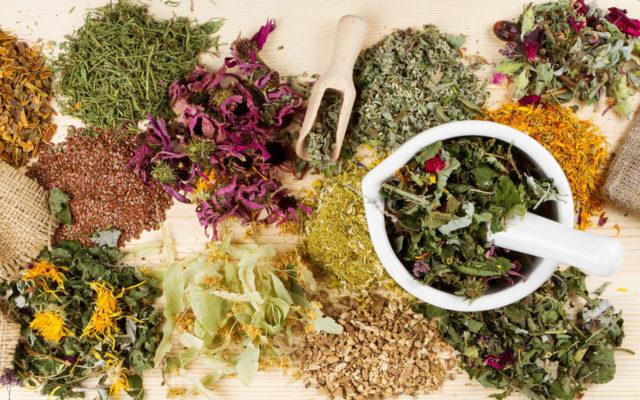 Лекарственные травы могут стать отличной альтернативой медикаментам