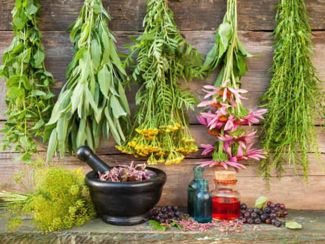 Метод лечения травами, доказавший свою эффективность в народной медицине
