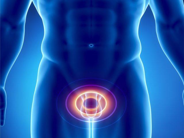 Восстанавливает либидо мужчины, улучшает эрекцию и эякуляцию