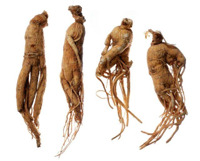 Действие этого корня основано на содержащихся в нем веществах, стимулирующих нервную систему, усиливающих кровообращение, снимающих сонливость