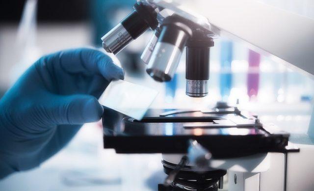 В норме иммунных кровяных клеток не должно быть вовсе