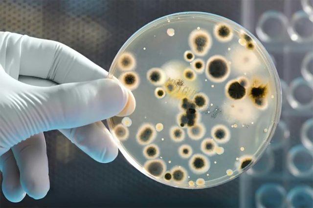 Существует шкала, по которой урологи определяют какие именно заболевания провоцируют рост кровяных клеток
